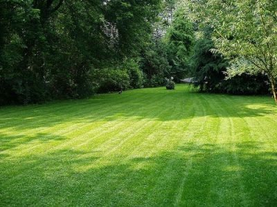 Featured Maintenance for September: Aerate and reseed your lawn