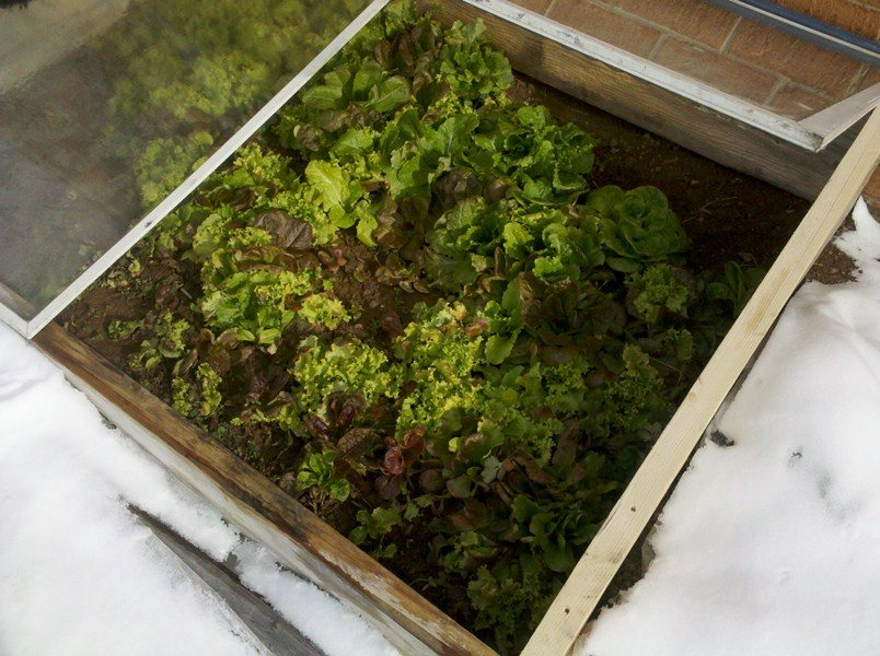 Use Cold Frames to Beat the Cold