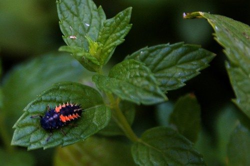 5 Tips for keeping Bugs out of your Garden