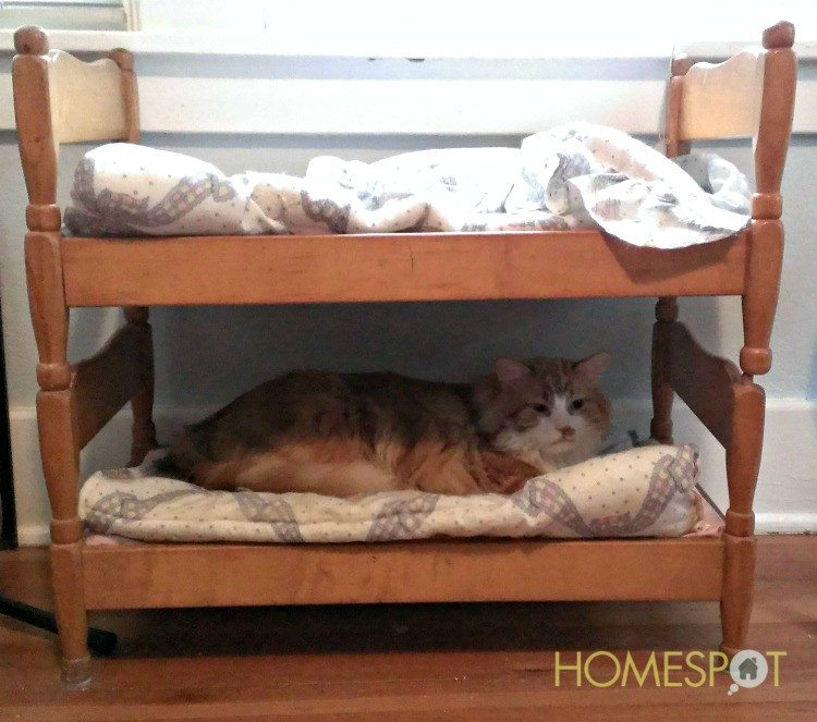 Furniture For Pets