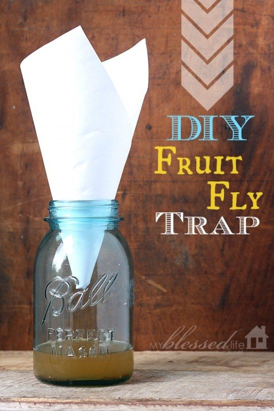 how to make a fruit fly trap australia