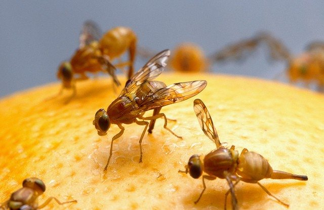 Prevent Fruit Flies
