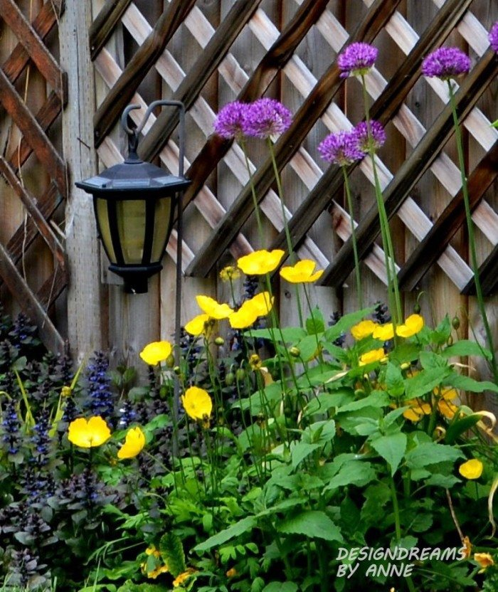 Yellow poppies, drumstick alliums and purple-leafed bugleweed.