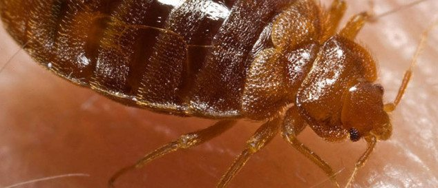 How To Avoid Bed Bugs Hitchhikers